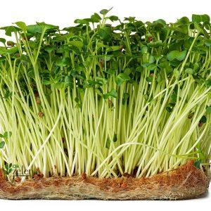 Микрозелень Дайкон 5г (семена)